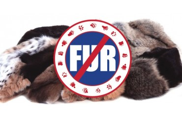 New Bill: How has fake fur established itself as a real alternative to the real one?